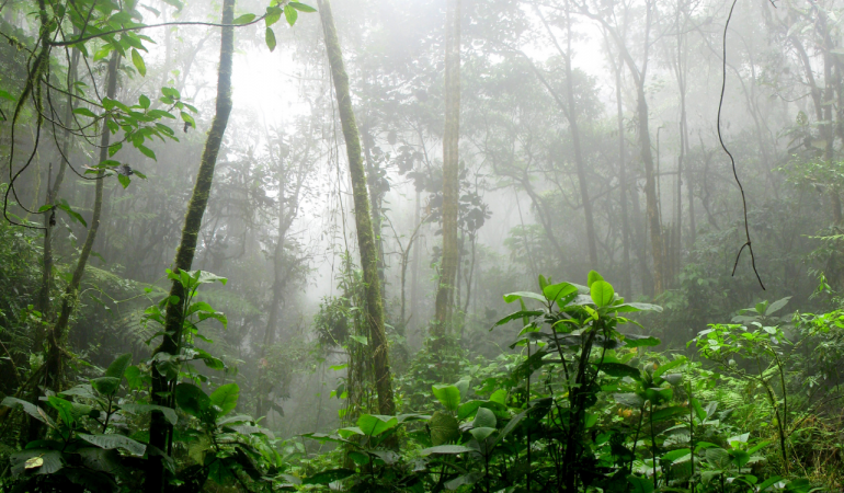 tropical forest fog